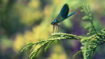 Animals dragonflies insects wallpaper
