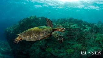 Animals turtles wallpaper