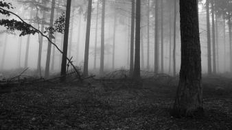 Black and white nature trees forests fog wallpaper