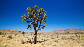 Blue skies deserts joshua tree landscapes lone wallpaper