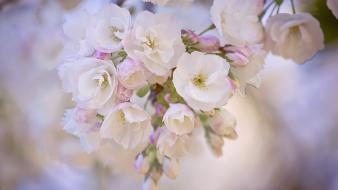 Blurred background flowers white wallpaper