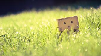Bokeh danboard macro smart depth of field wallpaper