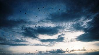 Clouds birds skyscapes skies wallpaper