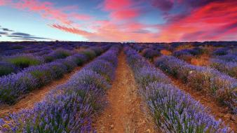Clouds fields landscapes lavender skies wallpaper