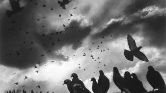 Clouds grayscale pigeons old photography skies harold feinstein Wallpaper