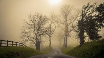 Dawn fog landscapes roads wallpaper