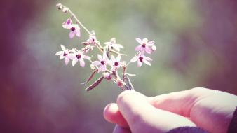 Flowers hands twig wallpaper