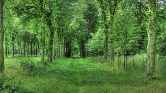 Forests grass green landscapes nature wallpaper