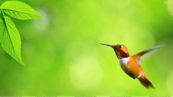 Green nature flying birds leaves hummingbirds background wallpaper