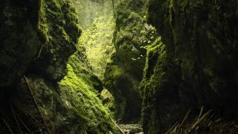 Green nature forests rocks moss wallpaper