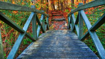Green trees autumn wood bridges hdr photography colors Wallpaper