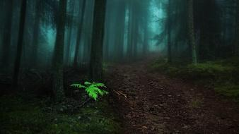Landscapes nature paths fog dark forest morning view wallpaper