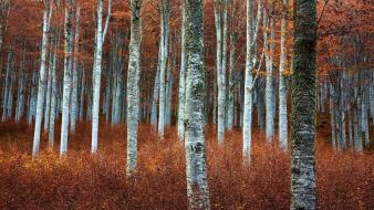 Landscapes nature trees autumn forests beech grassland wallpaper