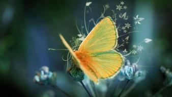 Nature animals moth butterflies Wallpaper