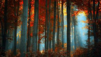 Nature trees autumn forests red leaf wallpaper
