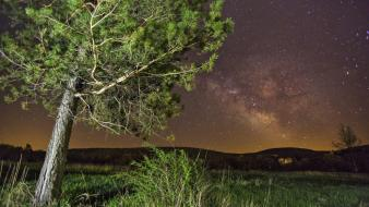 Trees stars night sky wallpaper