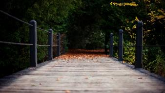 Trees wood leaves paths wooden bridge wallpaper