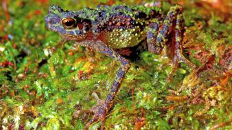 Amphibians frogs wallpaper