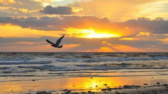 Animals beaches birds nature sea wallpaper