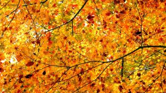 Autumn leaves trees wallpaper