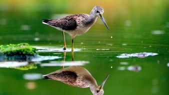 Birds reflections water wallpaper