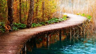Blue forests green lakes landscapes wallpaper