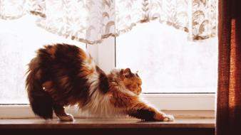 Cats animals pets windows Wallpaper