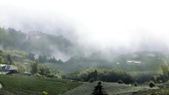 Clouds landscapes nature tea fields fog mist wallpaper