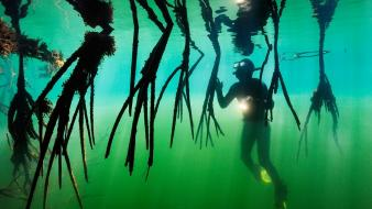 Diver national geographic central america underwater wallpaper