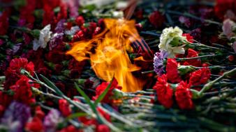 Flames multicolor flowers depth of field Wallpaper