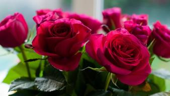 Flowers roses wallpaper