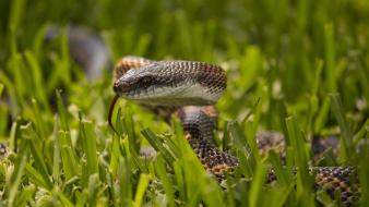 Grass snakes macro wallpaper