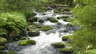 Green water nature trees rocks streams pulp wallpaper