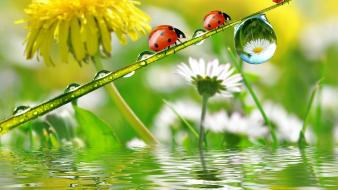 Ladybirds wallpaper
