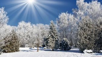 Landscapes nature winter snow trees Wallpaper