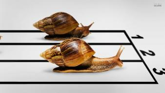 Molluscs numbers race racing snails wallpaper