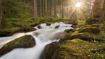 Nature trees forests moss creek sun rays Wallpaper