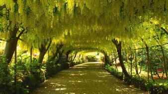 Nature trees garden wales parks arch wallpaper