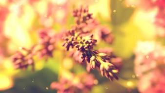 Plants macro lilac depth of field warm wallpaper