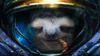 Starcraft animals sloth helmets ii photo manipulations wallpaper