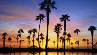 Sunset nature silhouettes palm trees Wallpaper