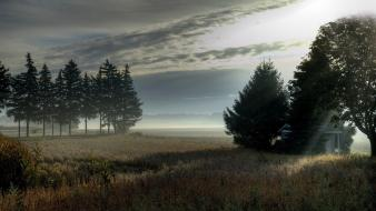 Trees fields mist wallpaper