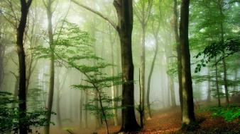 Trees forests mist wallpaper