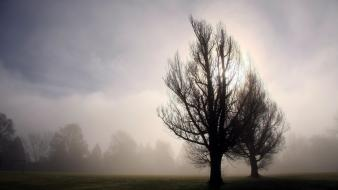 Trees grass mist wallpaper