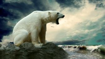 Water polar bears Wallpaper