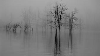 Water trees fog grayscale lakes bushes wallpaper