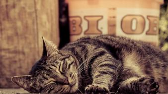 Animals cats pets sleeping Wallpaper