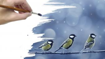 Birds artwork paint brushes blue tit wallpaper