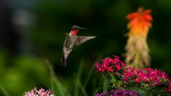 Birds flowers hummingbirds nature wallpaper