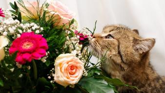 Flowers cats kittens wallpaper